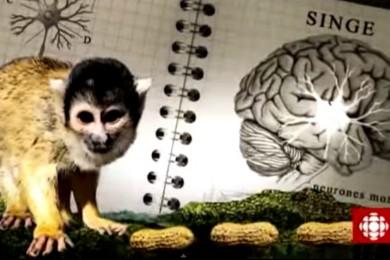 Cerveau social : Les neurones miroirs